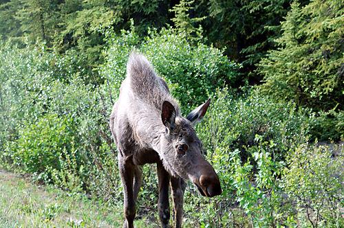 Alaska-08 473_edited-1