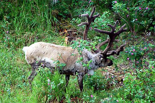 Alaska-08 030_edited-1