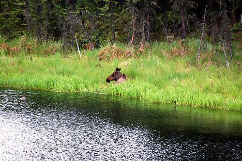 Alaska-08 592_edited-1