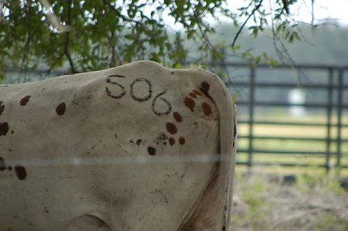 Countryside 005