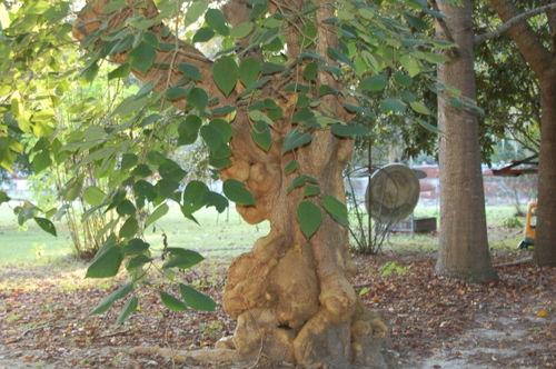 Troll tree 002