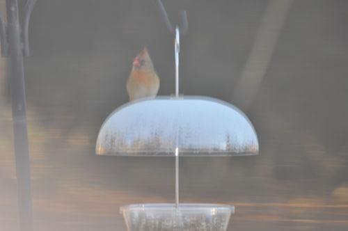 Birdbath 011