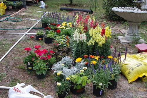 New plants 002