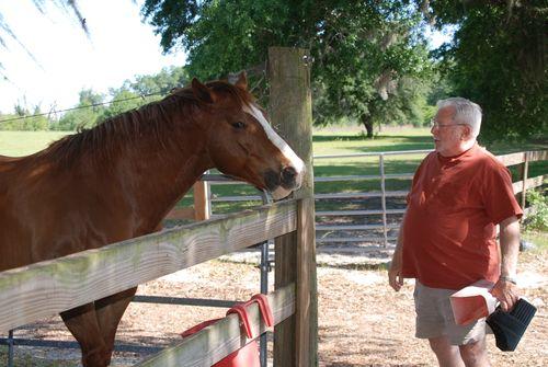 Horses 009