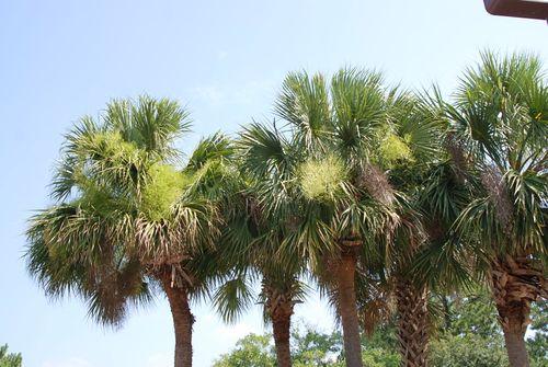 Gainesville 005