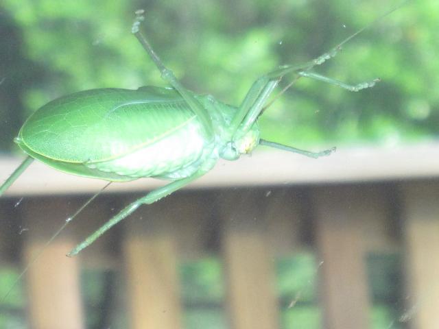 Cicada 015