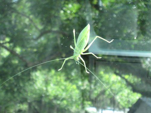 Cicada 018
