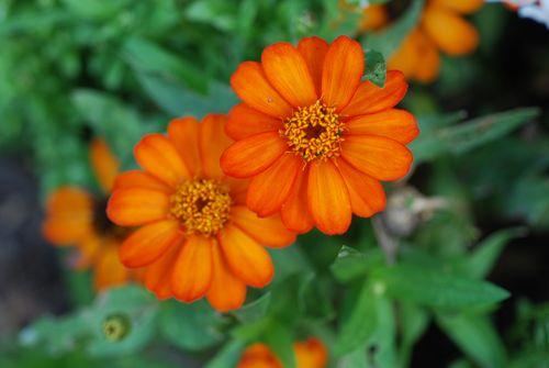 Flowers-6-09 009