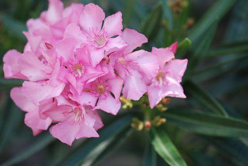 Yard flowers 022
