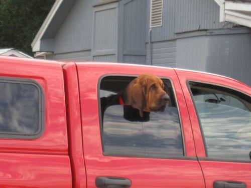Bloodhound 002