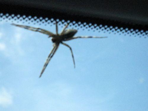 Spider 002