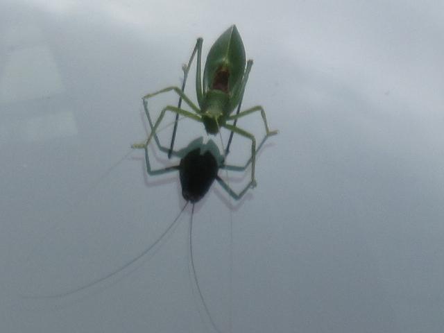 Cicada 022