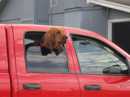 Bloodhound 001