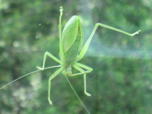 Cicada 019