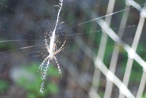 Spider web 008