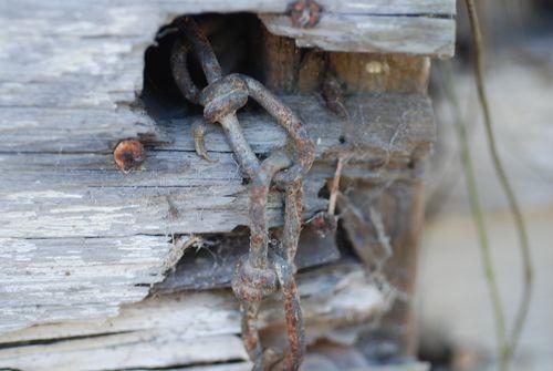 Spider web 012