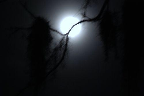 Blue moon 016