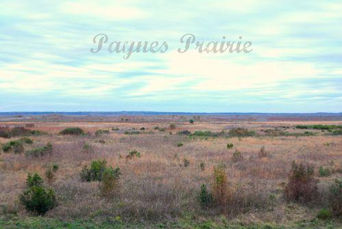 Prairie 003