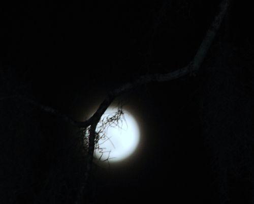 Blue moon 013