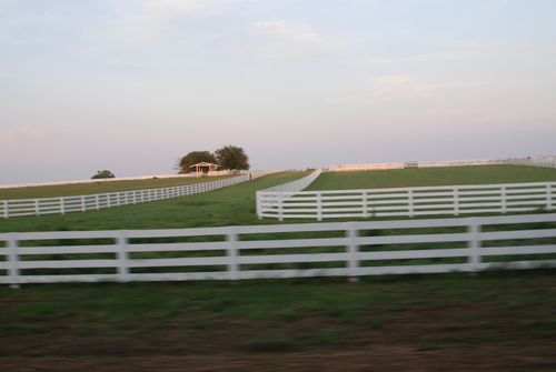 White fence 010