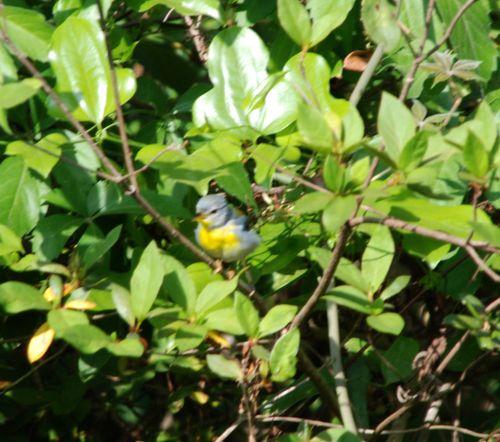 Blue bird 009_picnik