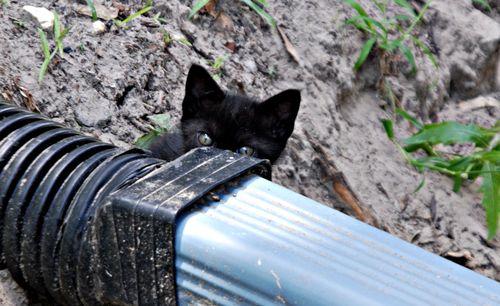 Kittens 001_picnik