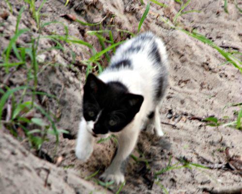 Kittens 005_picnik