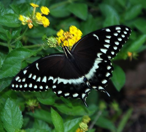 Buttterflies 027_picnik