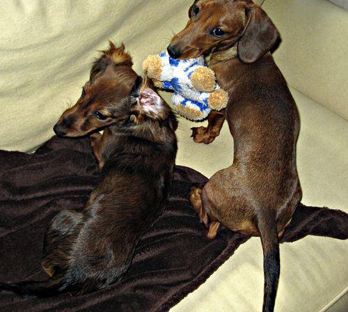 Dogs 010_picnik
