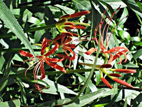 Flowers 002_picnik