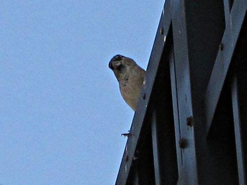 Sparrows 005_picnik