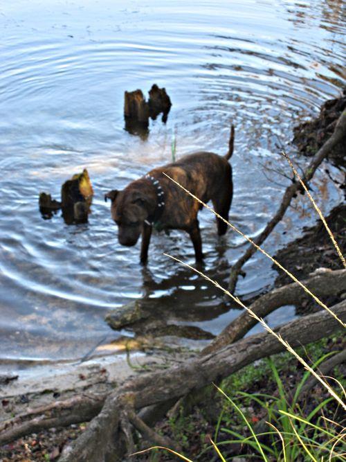 River dog 011_picnik