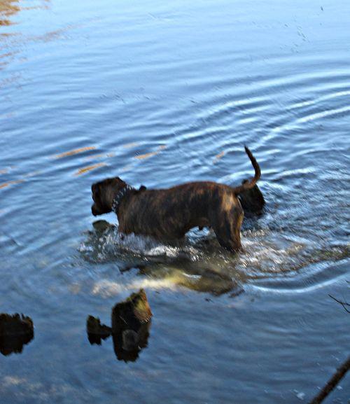 River dog 013_picnik