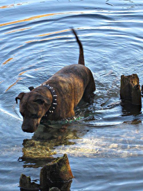 River dog 019_picnik
