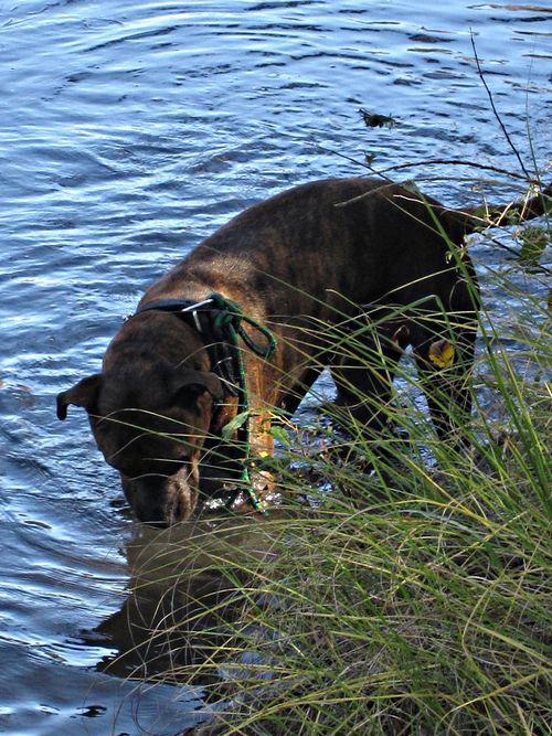 River dog 029_picnik