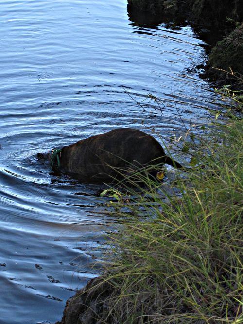River dog 031_picnik