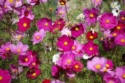 NORTH CAROLINA FLOWERS 10-12-07 008