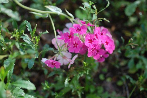 School flowers 002