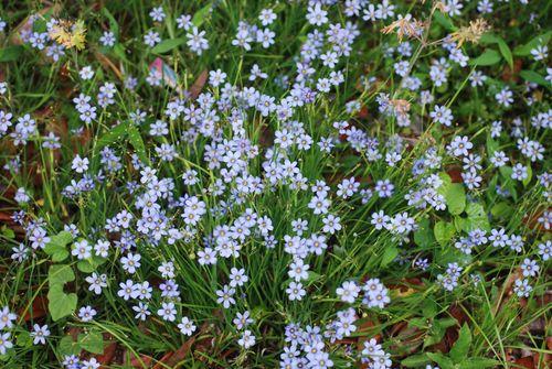 Flowers 069