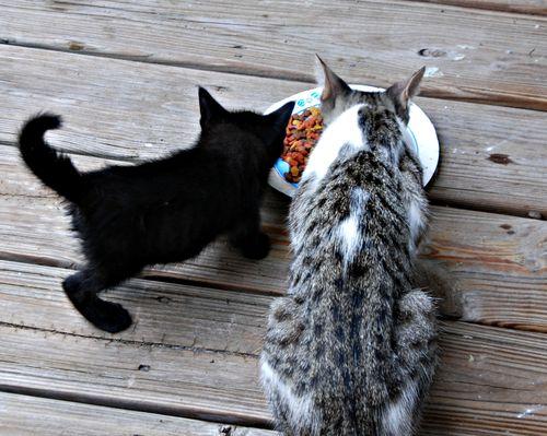 Kittens 017_picnik
