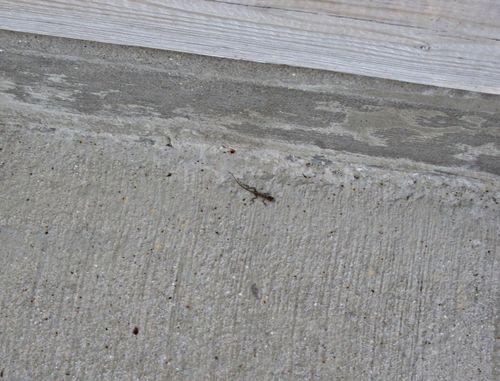 Lizard 002_picnik
