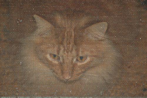 Stray cat 003
