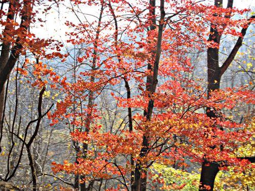 Fall  trip 2010 256_picnik