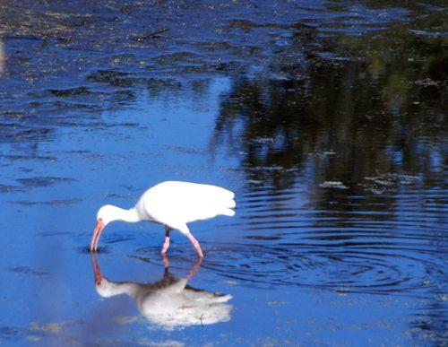 Storks 026