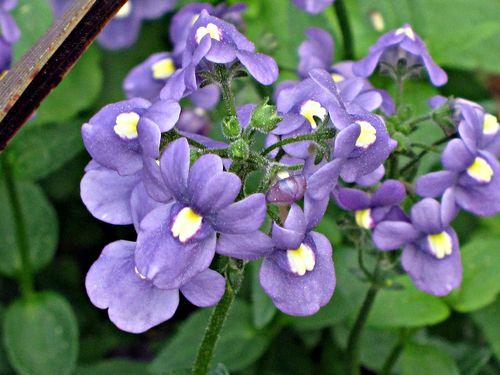 Rehab flowers 004