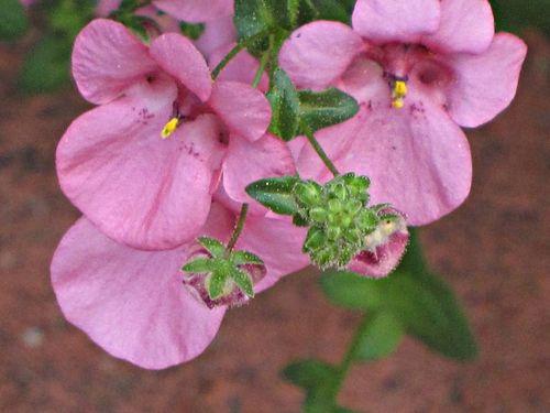 Rehab flowers 007