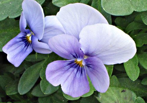 Rehab flowers 001