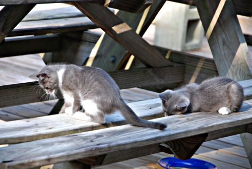 Kittens 006