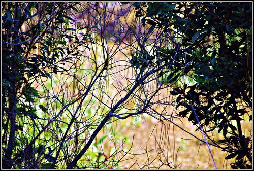Rehab wetlands 013