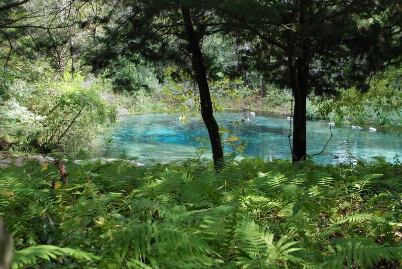 The springs 005